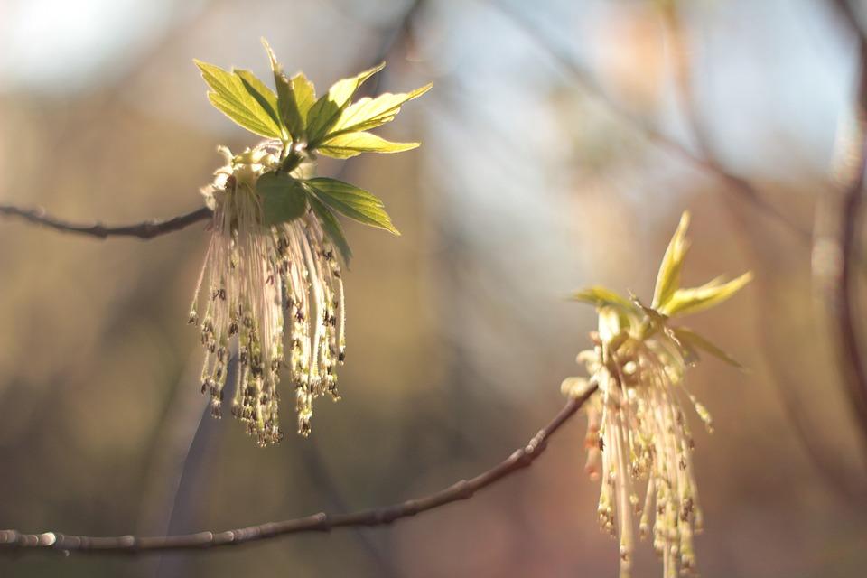 Spring, Color, April