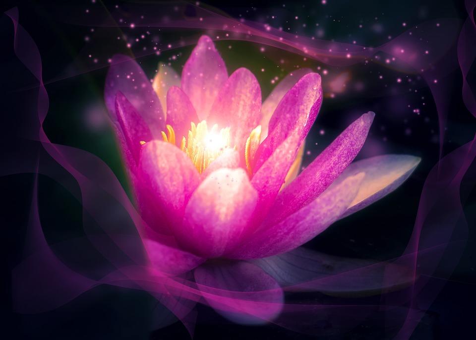 Flower, Lotus, Plant, Aqua Table, Puddle, Lily, Nature