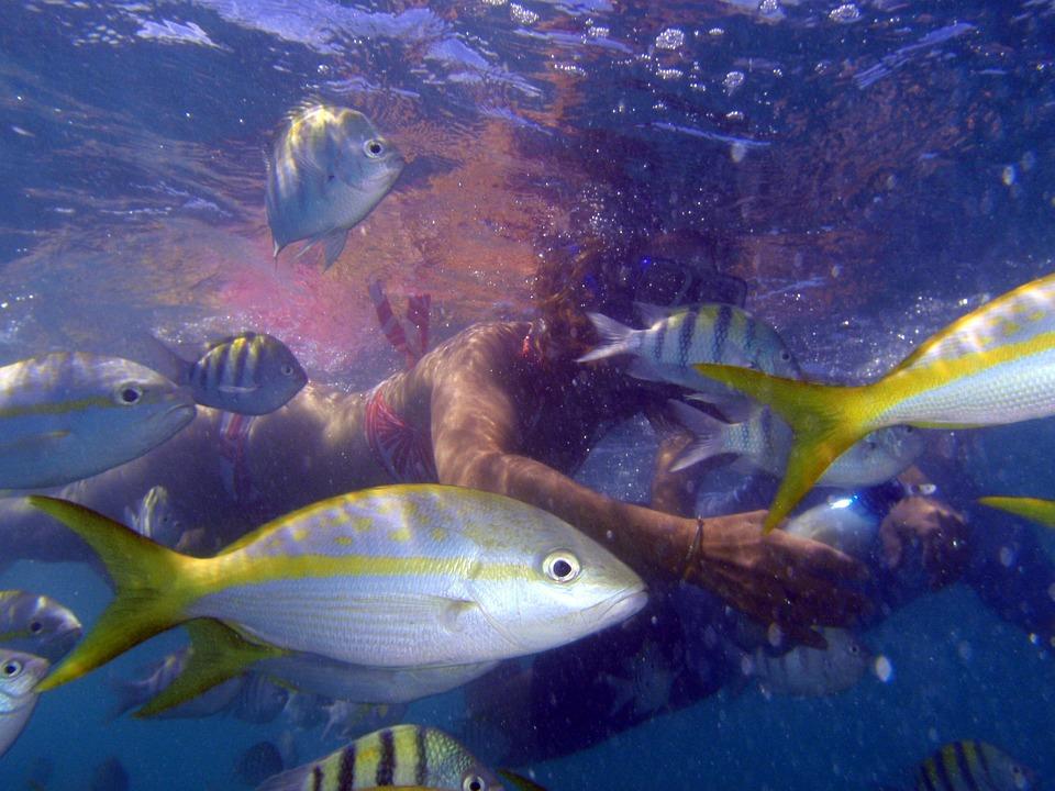 Scuba Diving, Cuba, Apnea, Fish, Ezptic, Aquarium