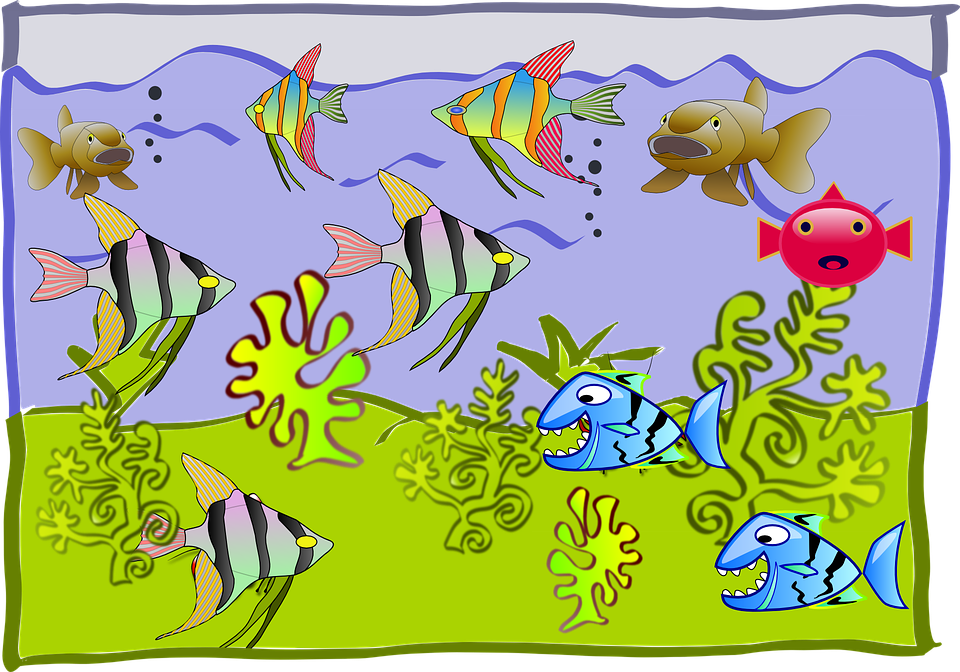 Fishtank, Cartoon, Aquarium, Water, Fish, Underwater