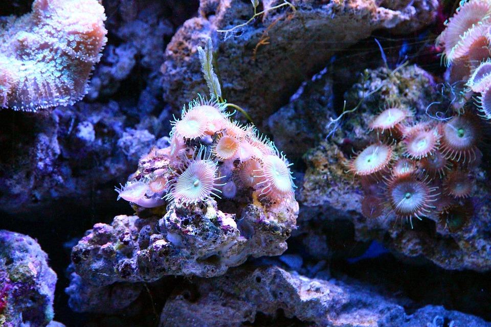 Coral, Polyp, Aquarium, Marine Aquarium, Reefs