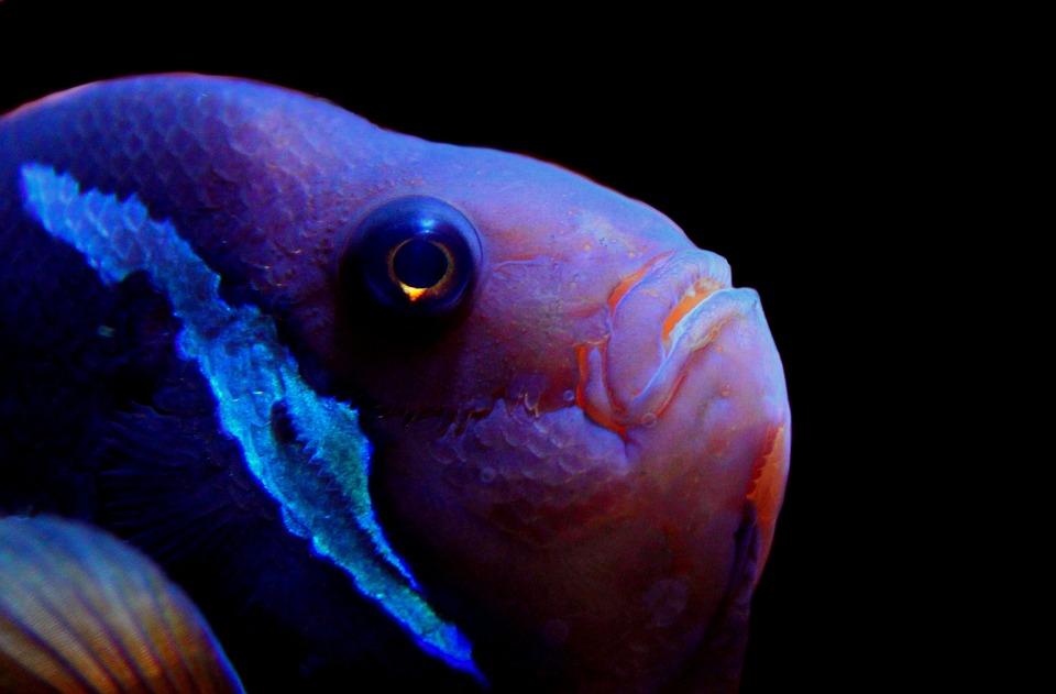 Fish, Underwater, Aquarium, Meeresbewohner, Sea Animal