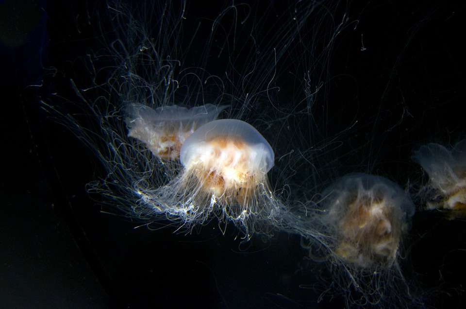 Jellyfish, Aquarium, Underwater, Peaceful, Sea Life