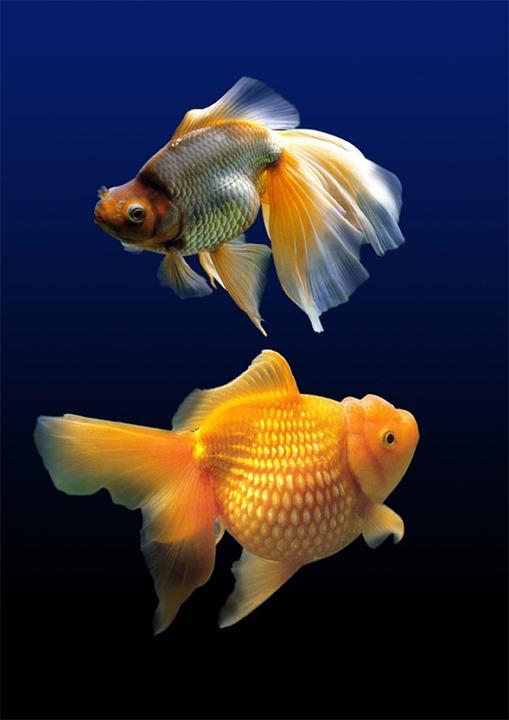 Fish, Aquarium, Water