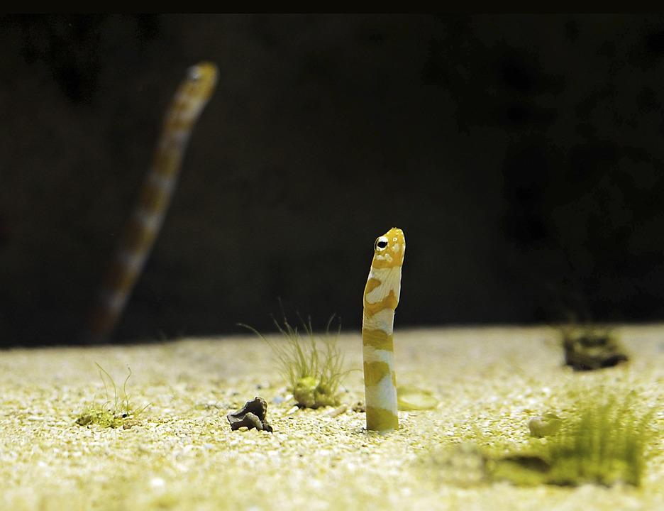 Worm, Fish, Aquarium, Water, Zoo, Underwater, Close