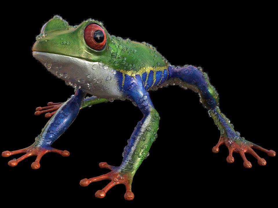Frog, Nature, Exotics, Exotic, Sitting, Aquatic Animal