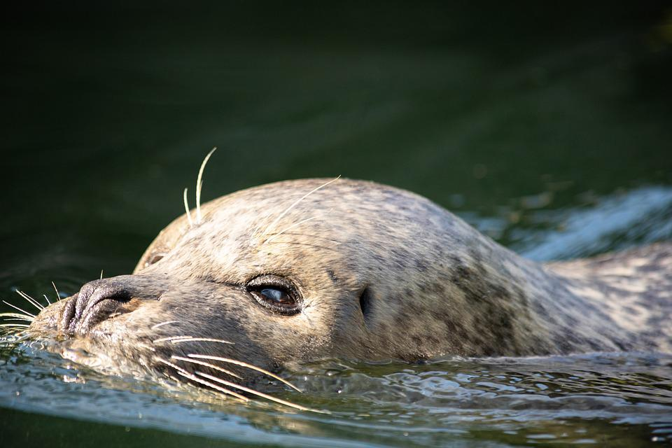 Sea Lion, Mammal, Aquatic, Animal, Water, Nature, Zoo