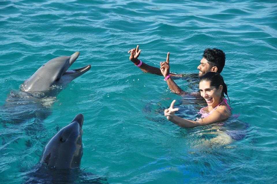 Dolphins, Fun, Swim, Water, Swimming, Aquatic, Playful