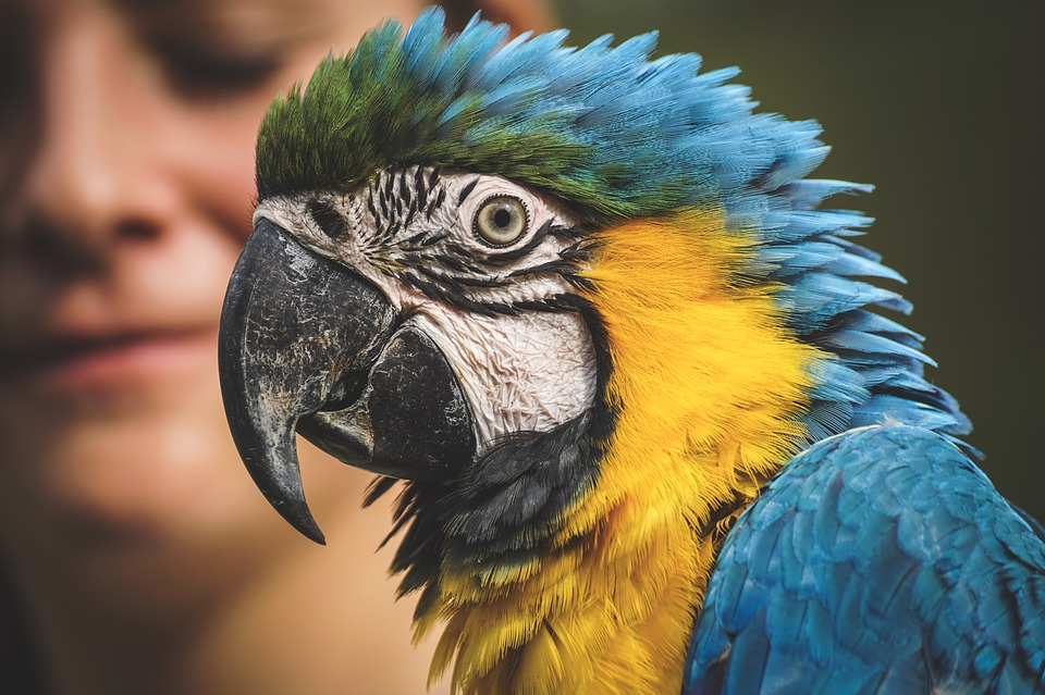 Ara, Parrot, Animal World, Yellow Macaw, Zoo, Close Up