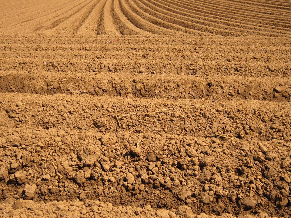Field, Arable, Furrow, Agriculture, Nature, Fields