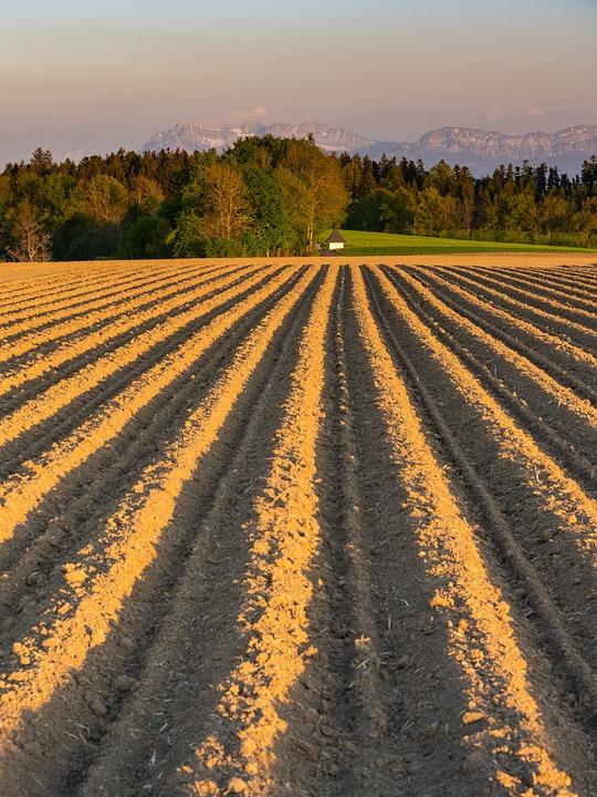 Arable, Ridge, Potatoes, Agriculture, Field