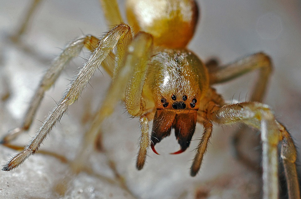 Spider, Arachnid, Macro, Nature, Animal, Predator, Bug