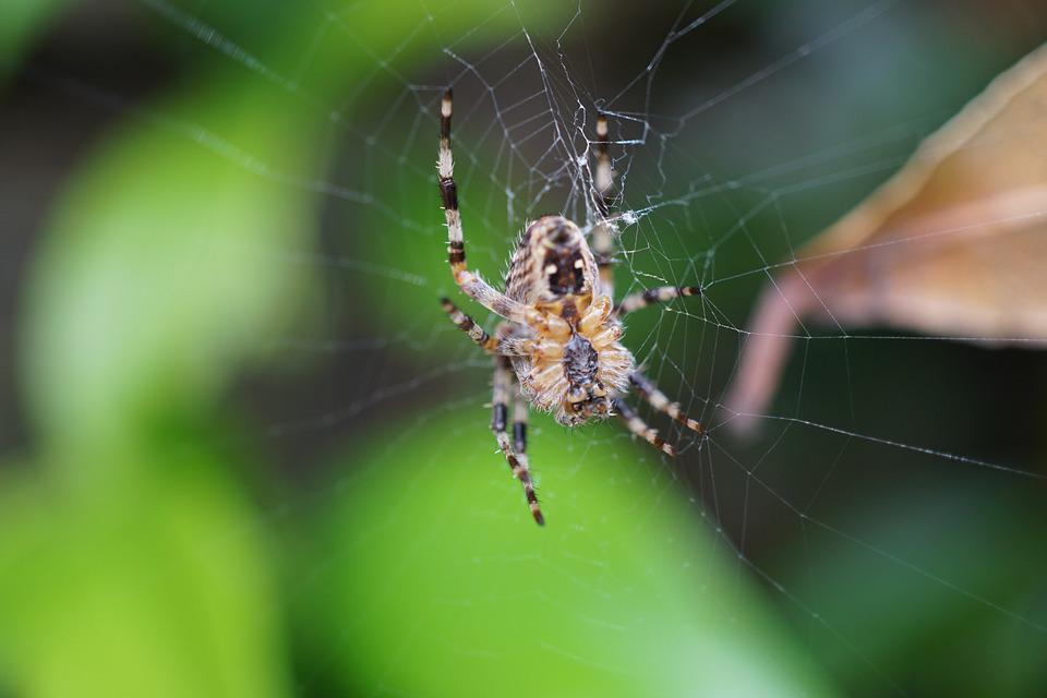 Spider, Network, Close, Cobweb, Arachnid, Nature