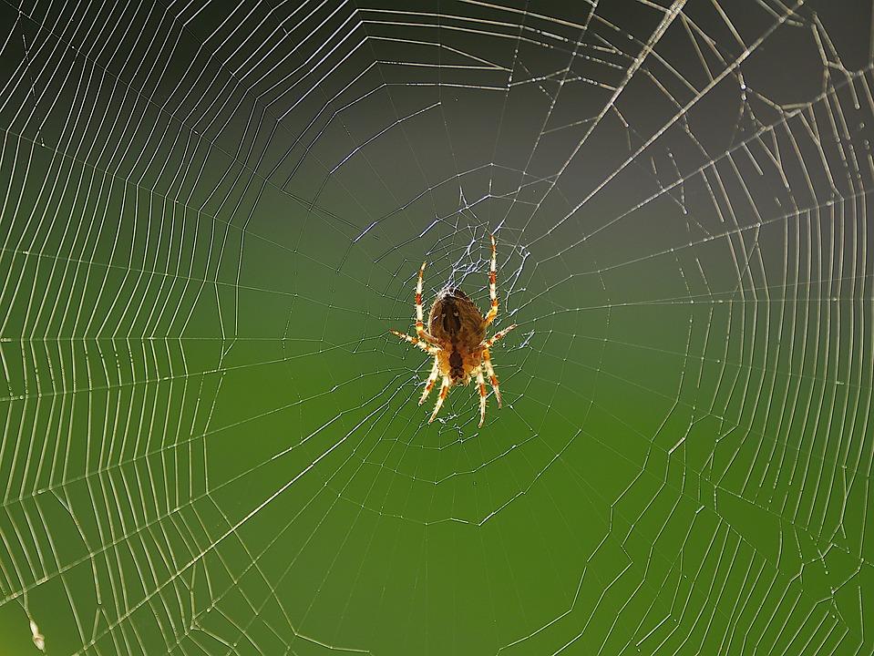Spider, Cobweb, Spider Web, Spider Silk, Arachnid