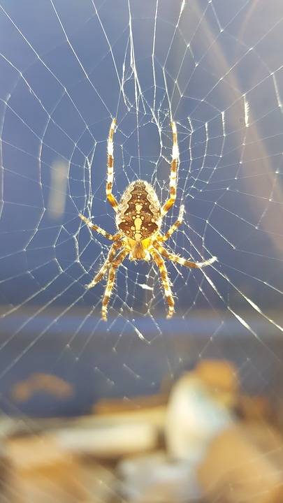 Spider, Poison, Animal, Web, Nature, Insect, Arachnid
