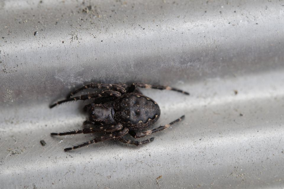 Spider, Lurking, Arachnid, Macro, Arachnida, Legs