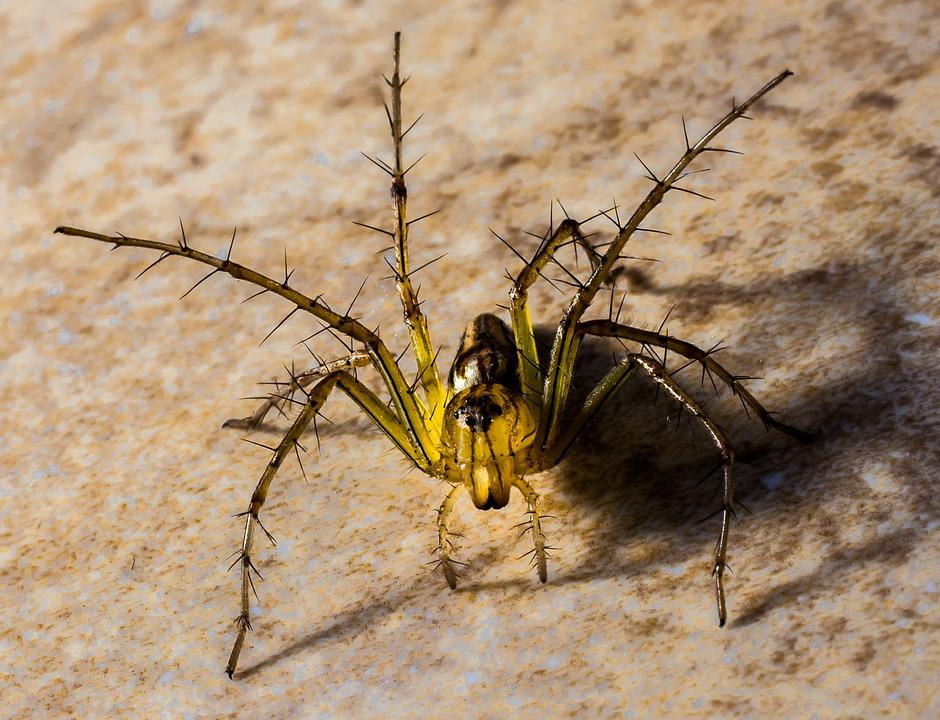 Small Spider, Spider, Arachnids, Close