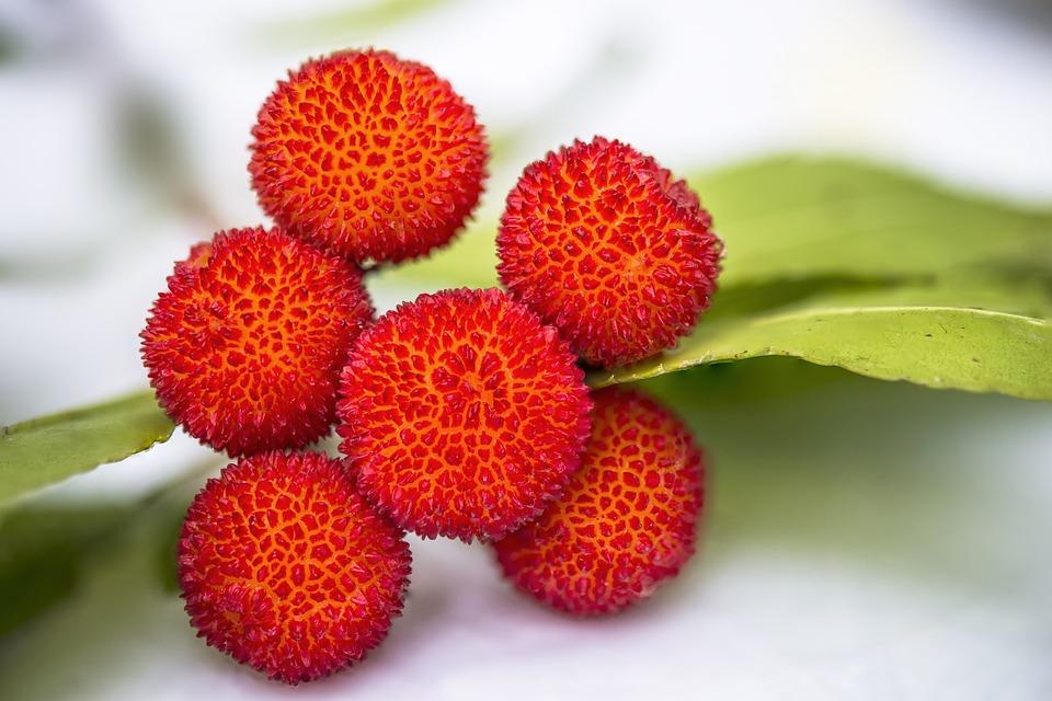 Arbutus, Fruit, Lychee, Edible, Vitamins, Red