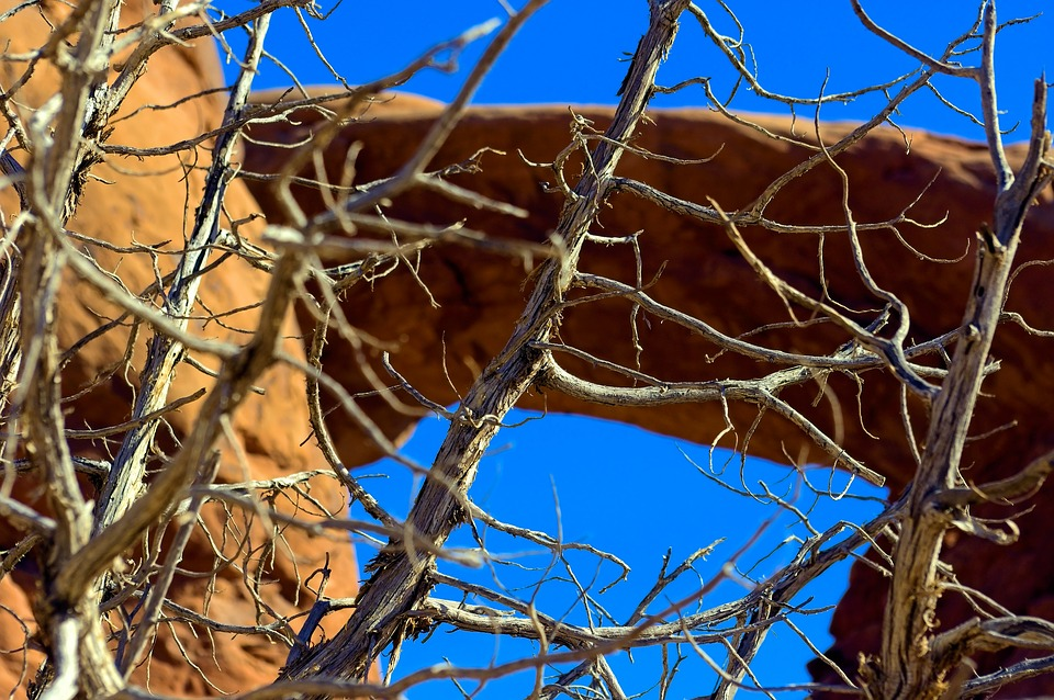 Bare Branches Against Arch, Arch, Desert, Utah, Geology