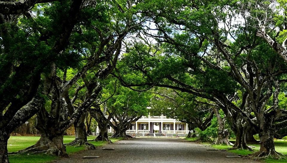 Manor House, Trees, House, Architecture, Avenue