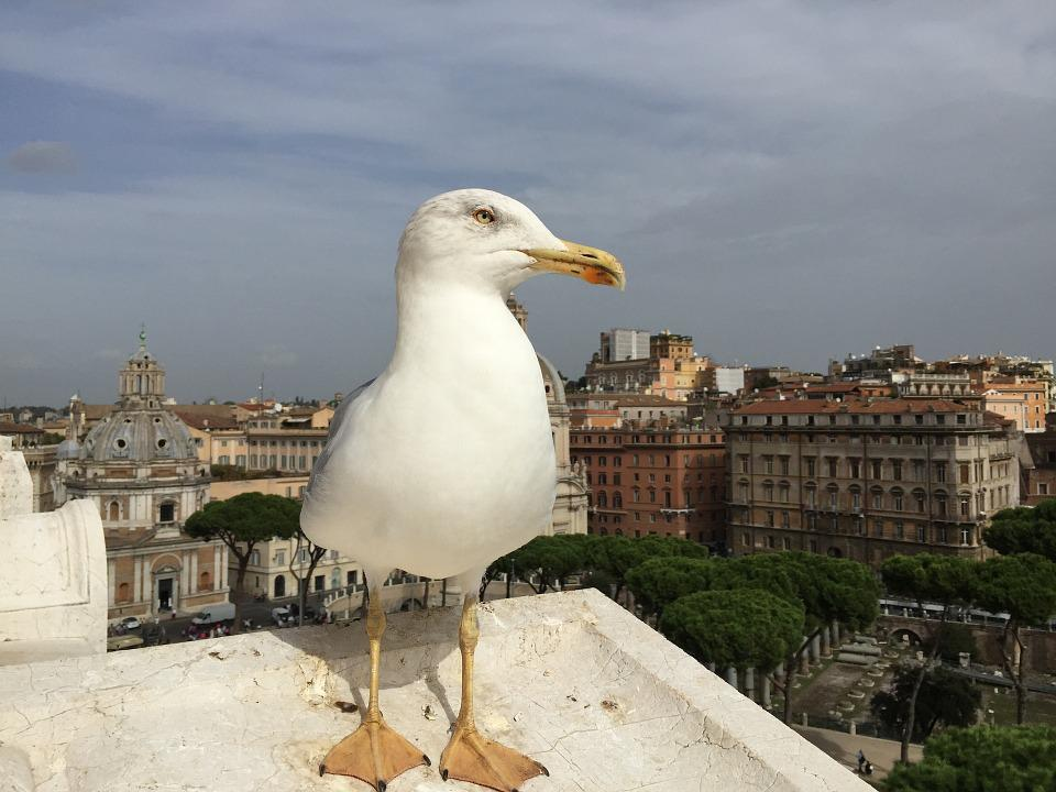 Seagull, Rome, View, City, Travel, Architecture