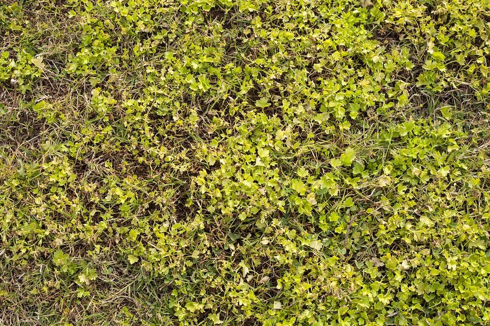grass texture green field football area close grass field texture88 field