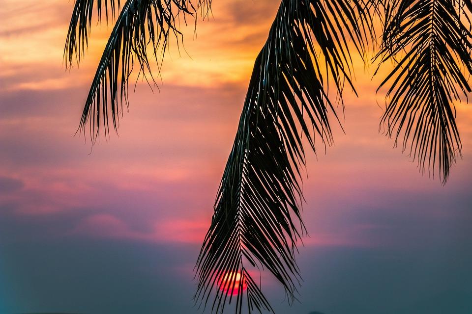 Sunset, Beach, The Tropical, The Coast, Arecaceae, Sky