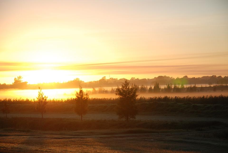 Junin, Argentina, Sunrise, Fog, Trees, Forest, Sky
