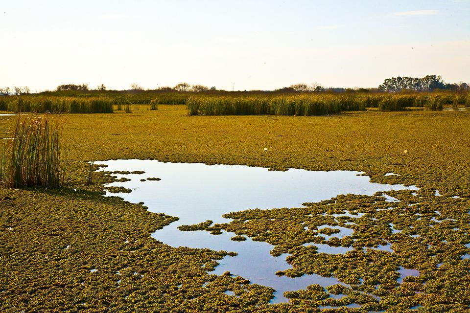 Ranches, Green, Park, Pampa, Argentina