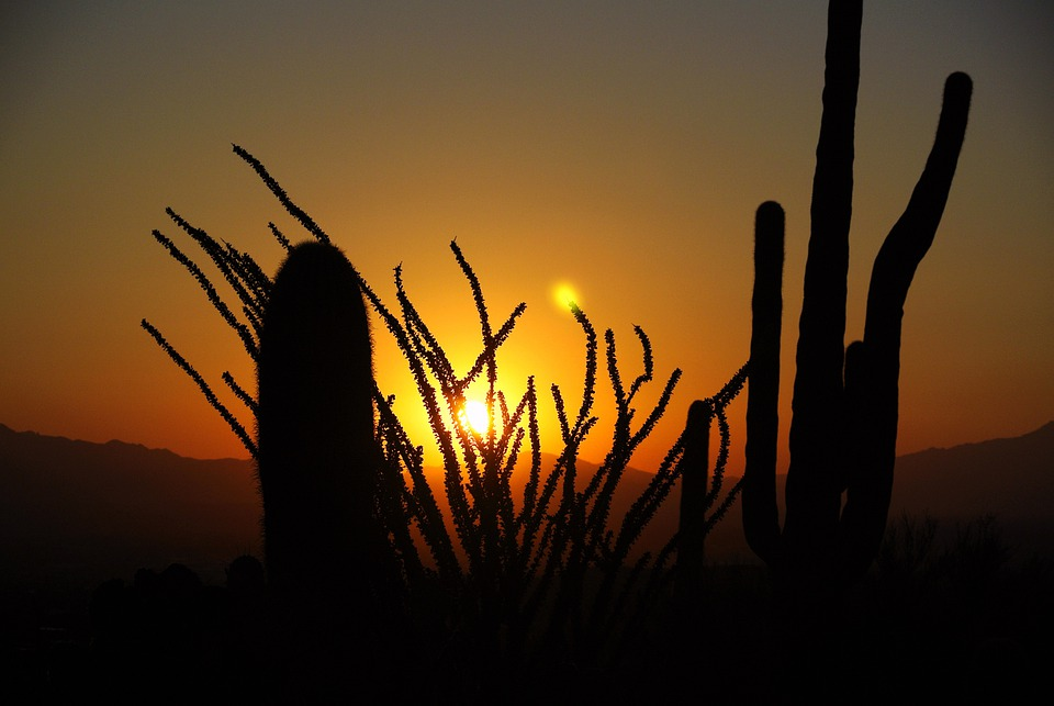 Cactus, Sunrise, Desert, Landscape, Nature, Arizona