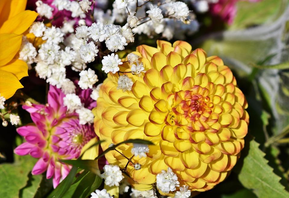 Dahlia, Dahlias Bud, Flower, Arrangement, Bouquet, Bud