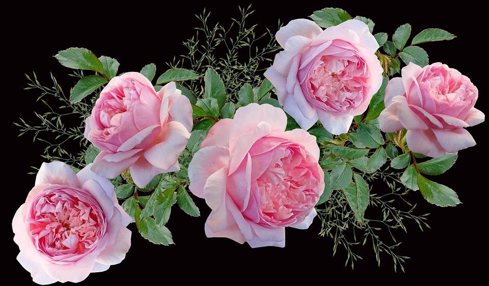 Flowers, Pink Roses, Leaves, Arrangement, Plants, Bloom
