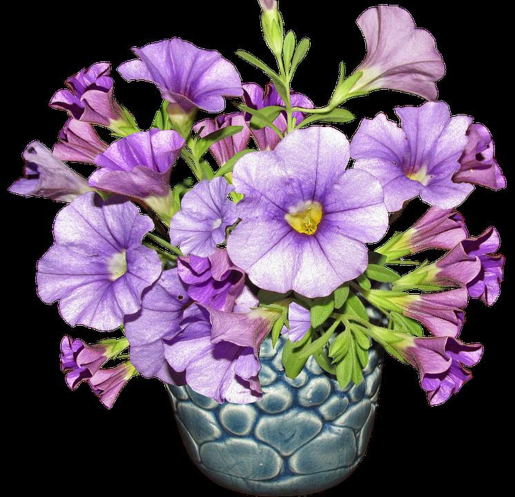Flower, Vase, Arrangement