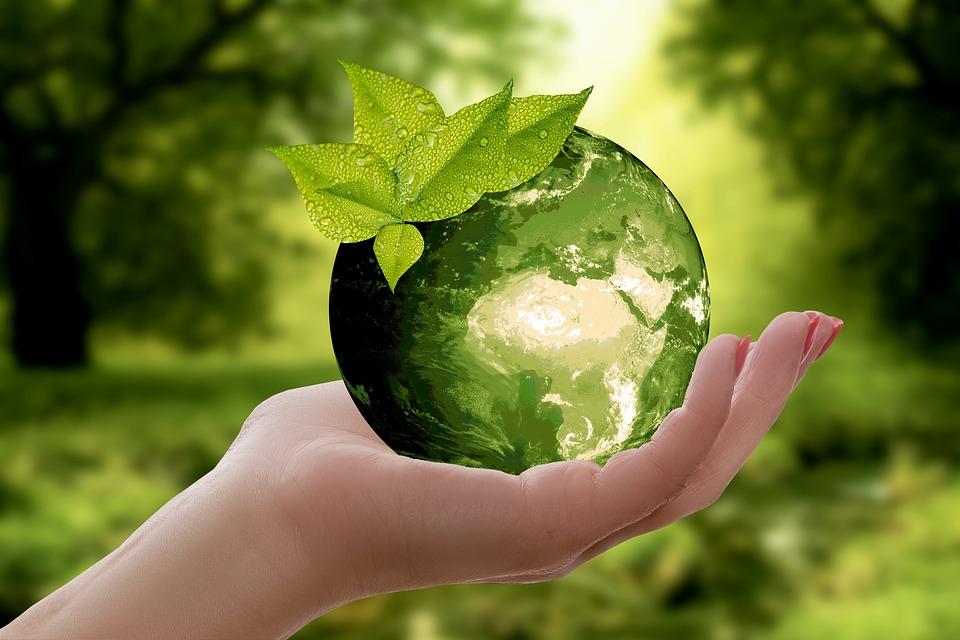 Nature, Earth, Sustainability, Leaf, Arrows, Caution