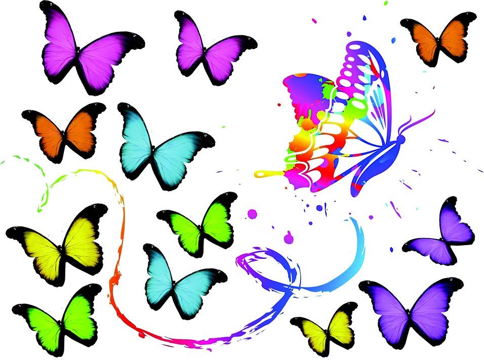 Butterflies, Art, Color, Colorful
