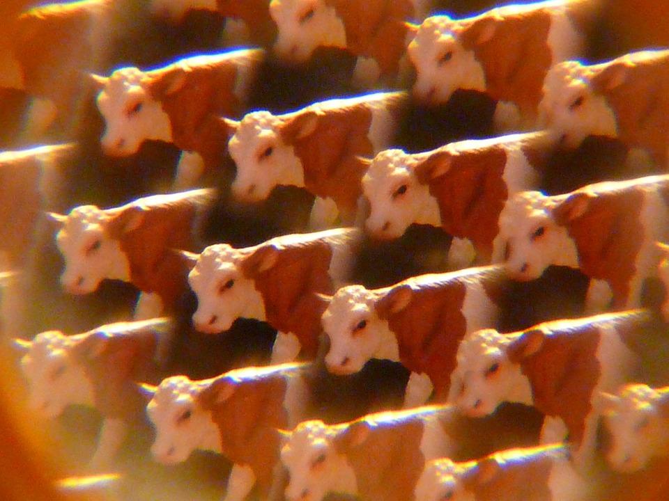 Cows, Kaleidoscope, Art