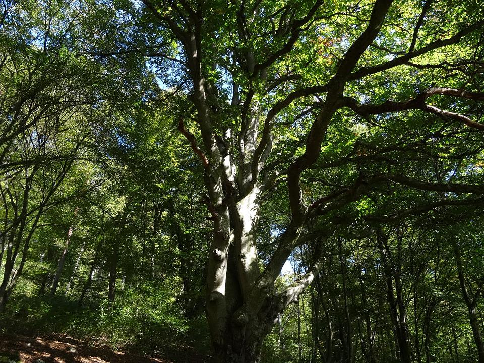 Tree, Forest, Autumn, Rest, Art, Green