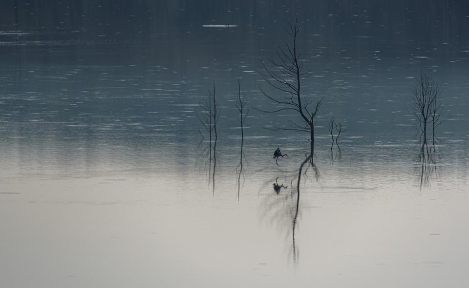Lake, Bird, Art, Artwork, Painting, Nature, Animal