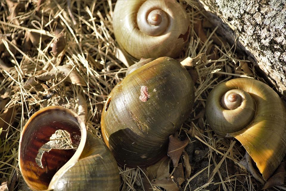 Art, Shell Art, Portrait, Giant Snail Shells, Creative