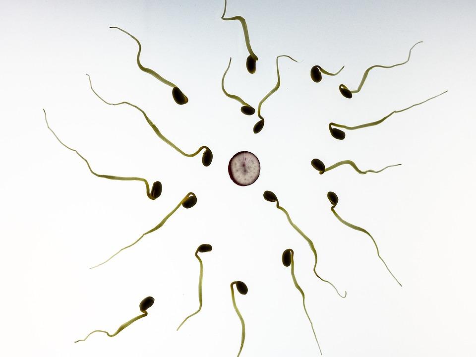Sperm, Fertilization, Pregnancy, Development, Live, Art