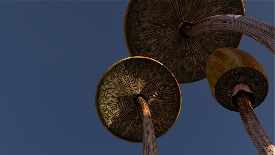 Mushrooms, Psilocybe, Psychedelic, Art, Background, Sky