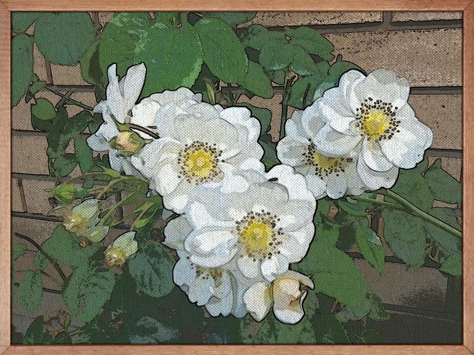 Painting, Art, White Roses, Flowers, Frame, Garden