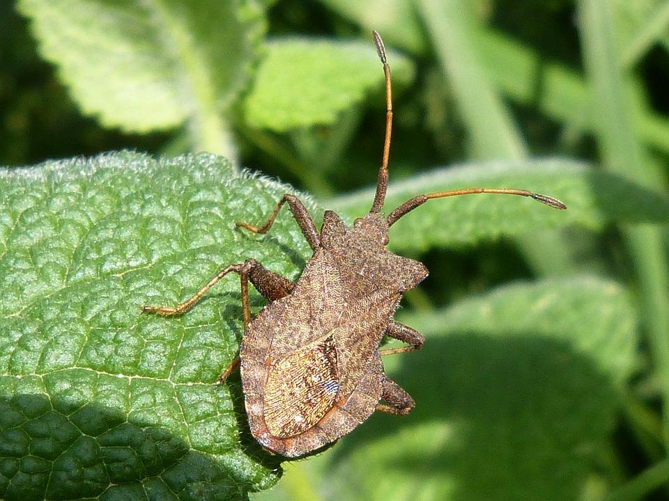 Insect, Arthropod, Leaf
