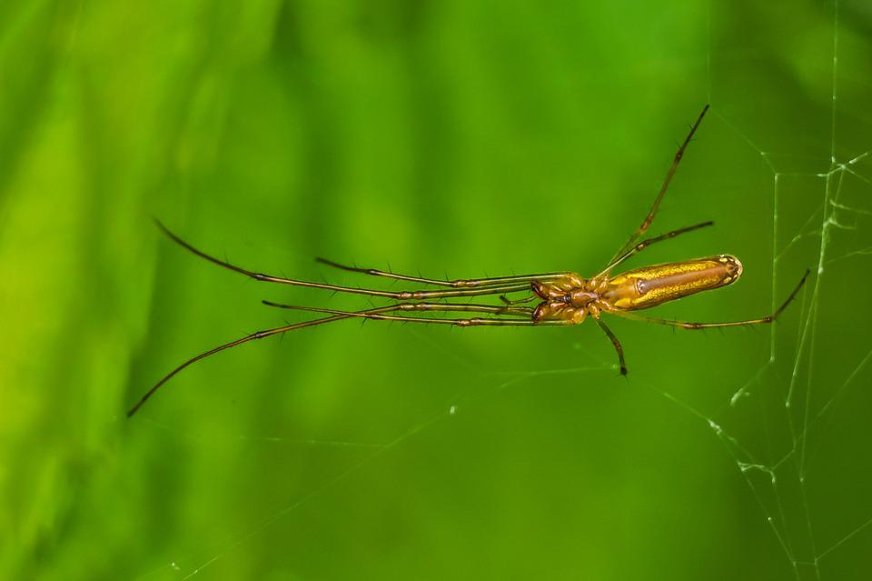 Spider, Arthropod, Nature, Hairy, Fauna, Arthropods