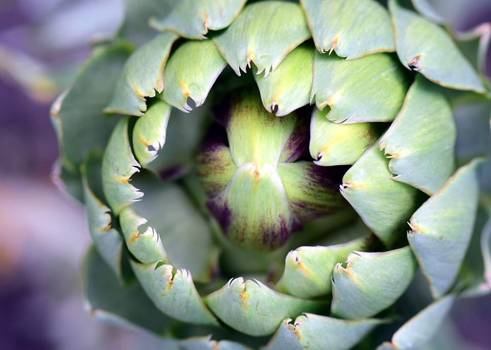 Artichoke, Artichoke Plant, Plant, Vegetables, Healthy
