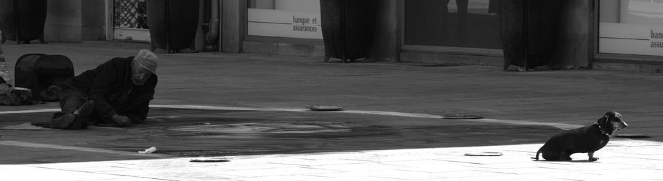 Nantes, Dog, Sun, Artist, Painter