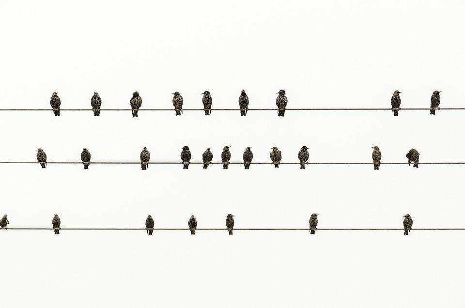 Minimal, Birds, Minimalism, Freedom, Artwork, White