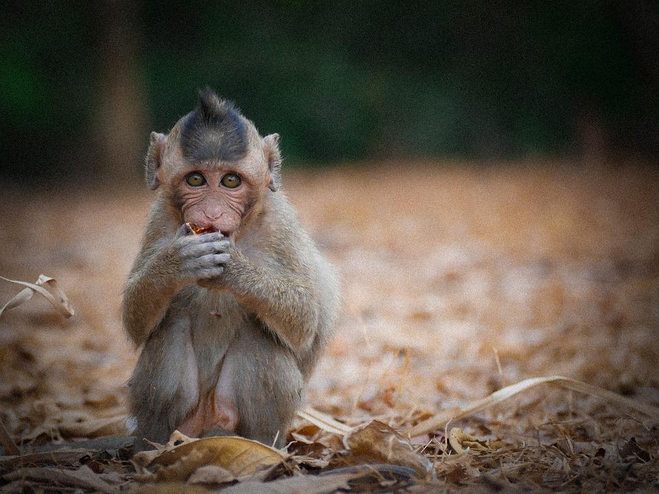 Animal, Asia, Background, Beauty, Cambodia, Coconut