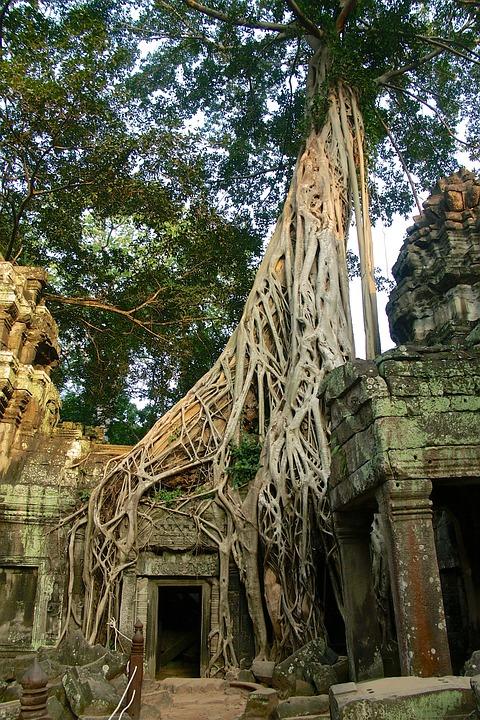 Angkor Thom, Cambodia, Ruin, Asia, Temple, Strangler