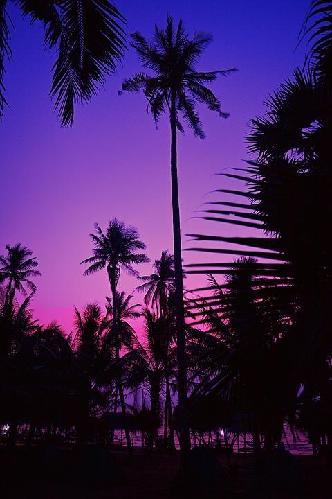 Kampot, Cambodia, Asia, Night, Seaside, Sea, Coconut
